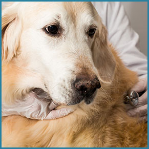 Veterinarian Pet Plans